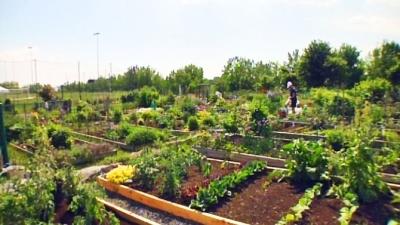 Un jardin communautaire..ça vous intéresse?